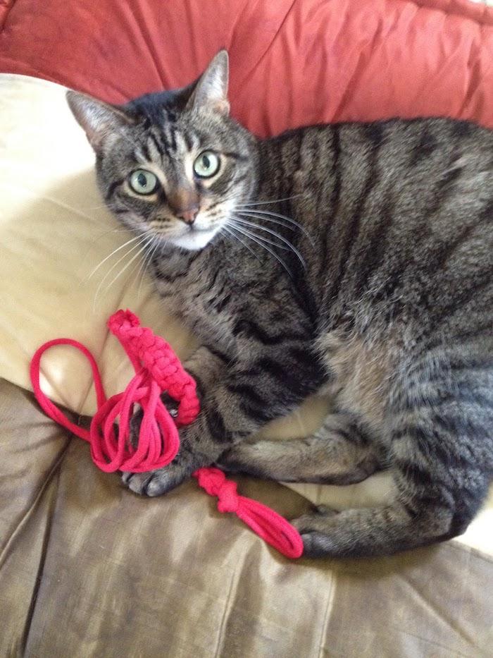 eine bunte Katze die mit einem rosa Band spielt auf Bettdecke in drei Farben - Katzenspielzeug basteln
