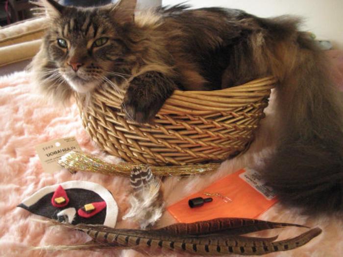 Katzenspielzeug basteln - eine Katze im Korb und alles Nützliches zum Basteln