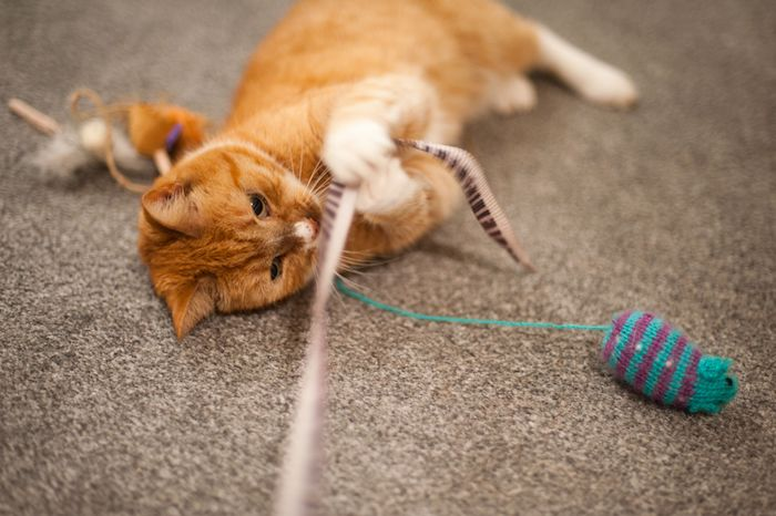 Simple and great instructions on how to make cat toys yourself
