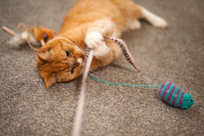 eine kleine Maus häkeln und auf einem Stoff befestigen auf einem Teppich