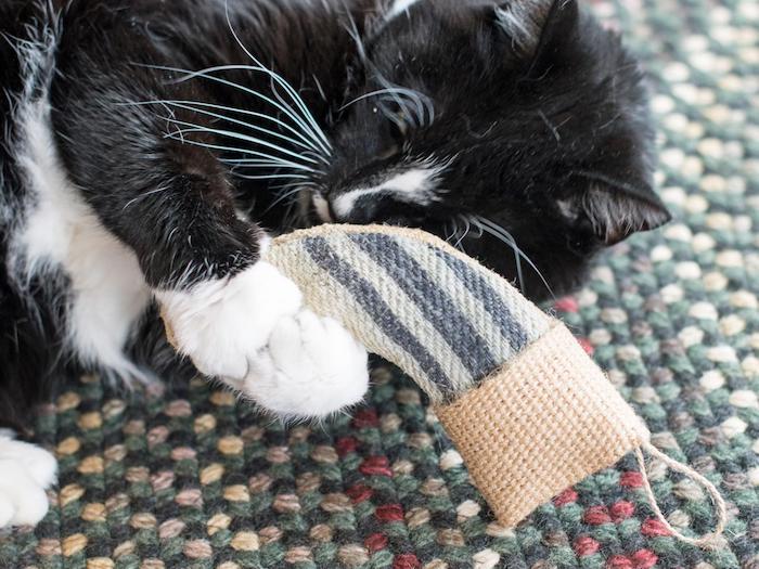 eine schwarz weiße Katze, die mit einer Socke spielt - Katzenspielzeug basteln