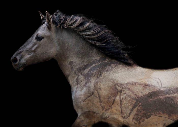 bild mit einem wilden bulgarischen, grauen pferd mit einer dichten schwarzen mähne, schönes pferdebild