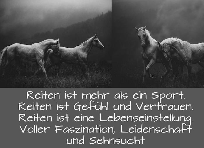 hier sind zwei bilder mit vier weißen, wilden pferden, wilde herde im wald mit schwarzen bäumen und grass und einem pferdespruch