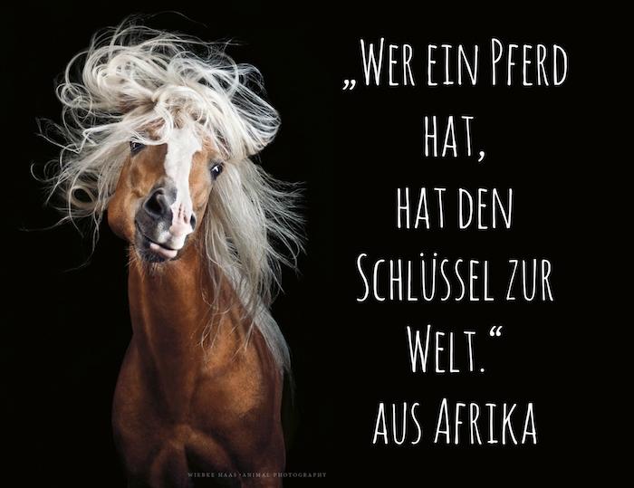 ein braunes pferd mit schwarzen augen und einer langen weißen mähne. sprichwort aus afrika, pferdebilder und pferdesprüche