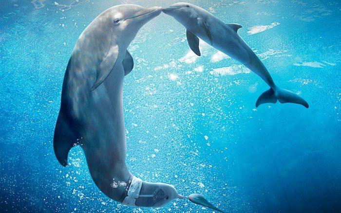 jetzt zeigen wir ihnen ein bild mit einem großen und einem kleinen baby delfin, die sich küssen und die zusammen in einem meeer mit einem blauen klaren wasser schwimmen