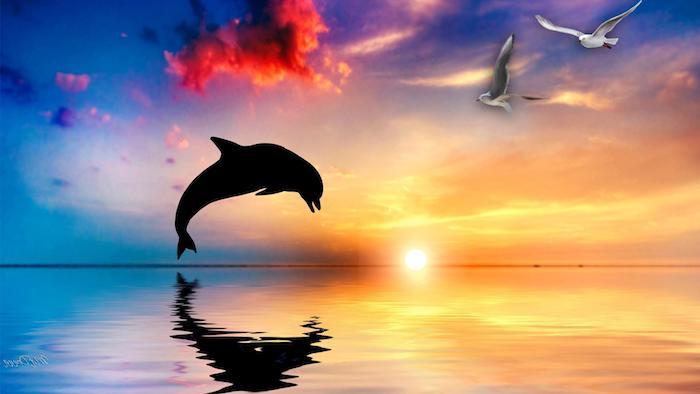 märchenhaftes bild mit einem schwarzen delfin im sprung, pinken wolken, einem sonnenzntergang und zwei weißen fliegenden vögel