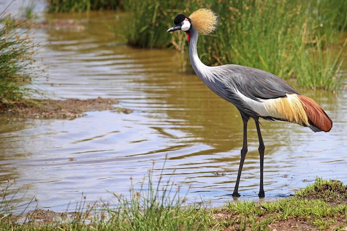 zanzibar urlaub safari in afrika unternehmen schöne vögel bilder wasser grünes grass vogel natur