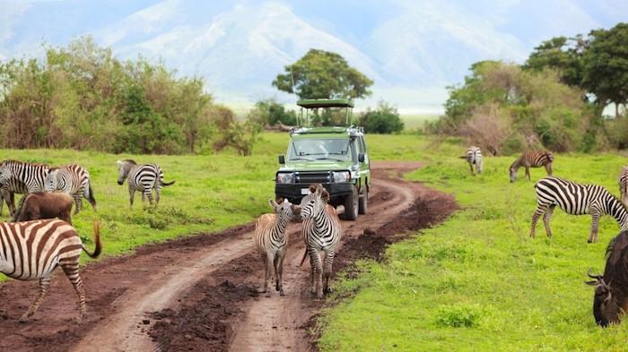 sansibar insel safari in afrika erlebnisse zum erinnern offroad safari abenteuer jeep wagen zebras natur tropik