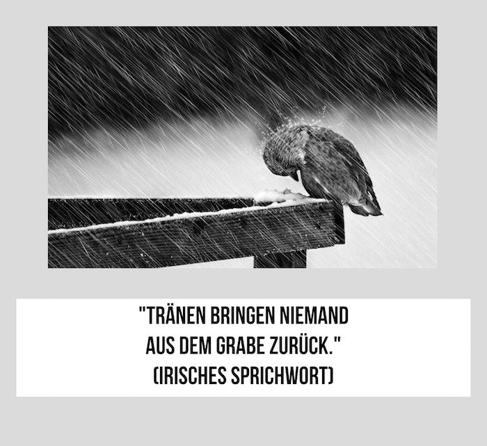 hier zeigen wir ihnen ein irisches sprichwort und ein trauriges bild mit einem traurigen weinenden vogel und regen - traurige ilder und traurige sprüche zum nachdenken