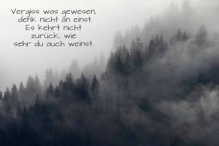 noch ein bild mit einem wald mit vielen bäumen und nebel - trauriges bild und traurige sprüche zum weinen