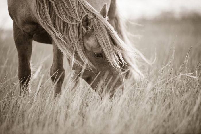 ein braunes pferd mit schwarzen augen und einer gelben langen mähne, grass, ein schönes pferdebild
