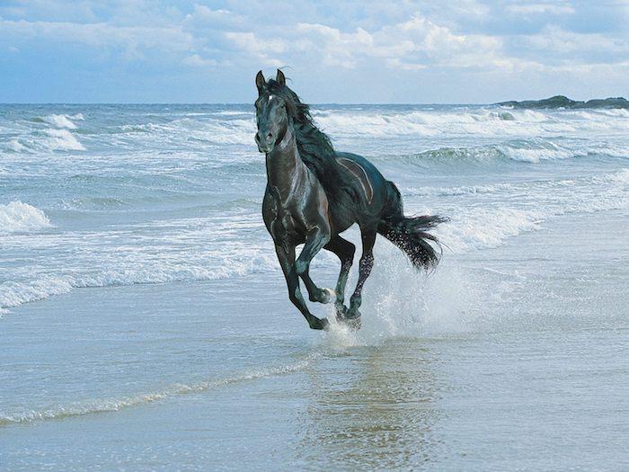laufendes, schwarzes pferd mit einer dichten schwarzen mähne, meer mit wellen und strand mit sand, blauer himmel mit weißen wolken