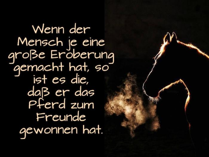 jetzt zeigen wir ihnen ein bild mit einem braunen pferd mit einer braunen mähne, pferdebild mit einem schönen pferdespruch