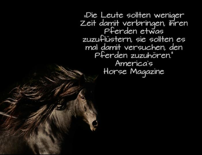 ein zitat zum thema pferde und reiten- pferdebild mit einem laufenden, blauen, wilden pferd mit einer langen braunen mähne
