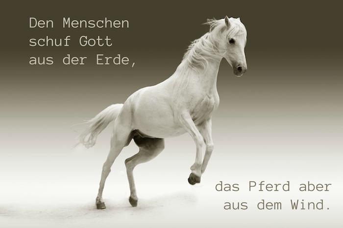 ein weißes pferd im sprung, pferd mit schwarzen augen und einer dichten, weißen mähne und grauen hufen, pferdebild mit einem kurzen pferdespruch