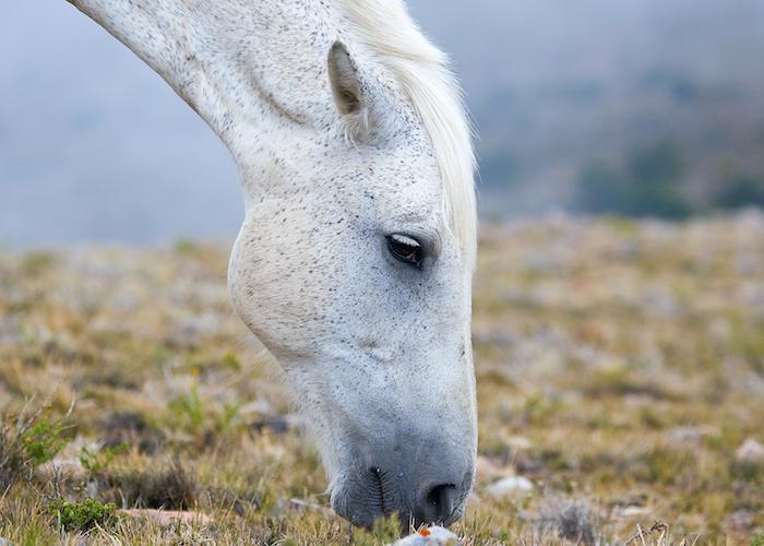 hier ist ein weißes pferd mit schwarzen augen und einer weißen mähne, bild mit grass und kleinen steinen, schönes pferdebild