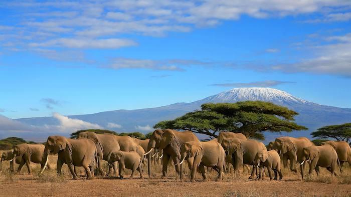 sansibar land safari in afrika die wilden tieren fotografieren elefanten kilimanjaro im hintergrund