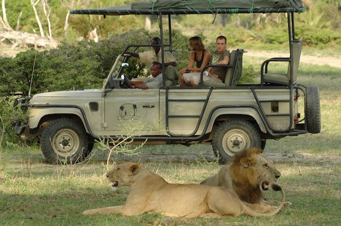 wetter sansibar safari reise in afrika tansania sansibar safariwagen löwen in der nähe erfahrungen gefährlich adrenalin