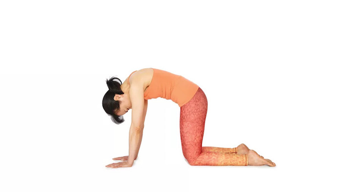 Yoga für Anfänger: eine Frau mit Pony und Pferdeschwanz, Übung Yoga Katze, enganliegende Hose in Rot und Orange, Arme und hinteres Teil der Beine am Boden, Rücken nach oben beugen