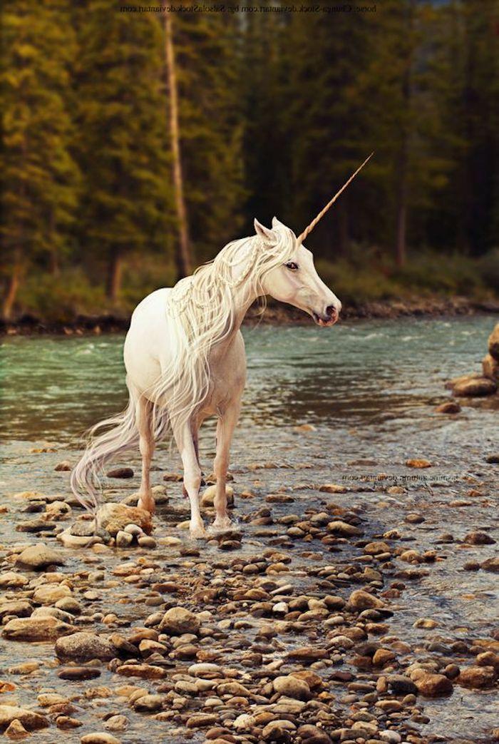 ein wald und fluss - ein weißes wildes einhorn mit blauen augen und einem langen horn