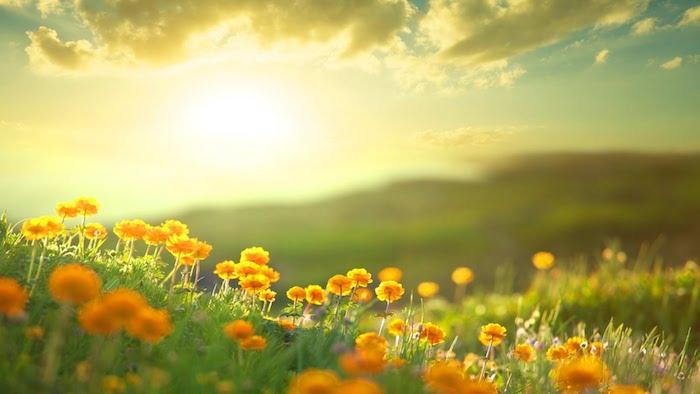 Guten Morgen Bilder orange Blumen auf einer Wiese von der Morgensonne beleuchtet