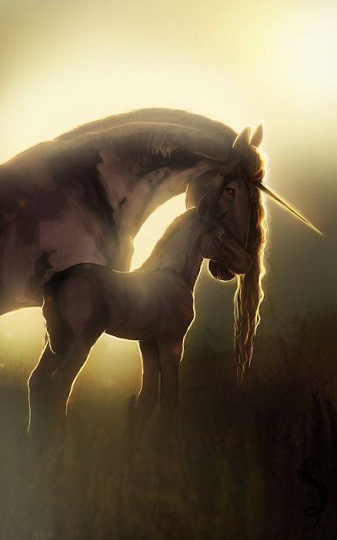 einhörner im sonnenuntergang - ein weißes einhorn mit einer langen mähne und einem langen horn