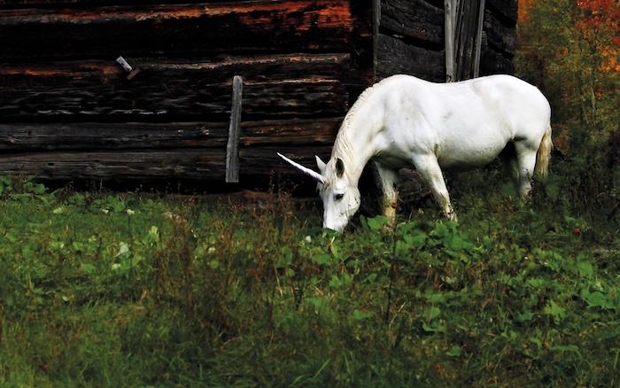 süße einhorn bilder - ein weißes kleines einhorn mit kleinen schwarzen augen und einem langen horn und grass