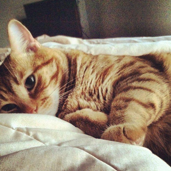 ein niedliches Kätzchen im Bett, es ist bereit aufgewacht und sieht verwirrt aus - süße Bilder