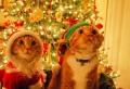 Niedliche und lustige Bilder zu Weihnachten, die zum Lächeln bringen