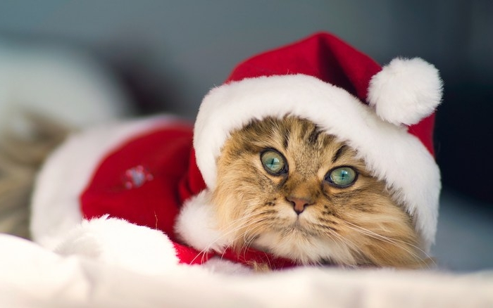 lustige Weihnachten eine entzückende Katze mit Weihnachtsmannmütze und Kostüm