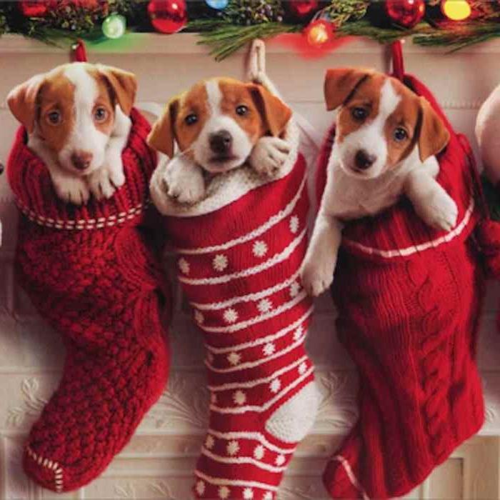 drei kleine niedliche Welpen in dem Weihnachtssocken an dem Kamin hängen - lustige Weihnachten