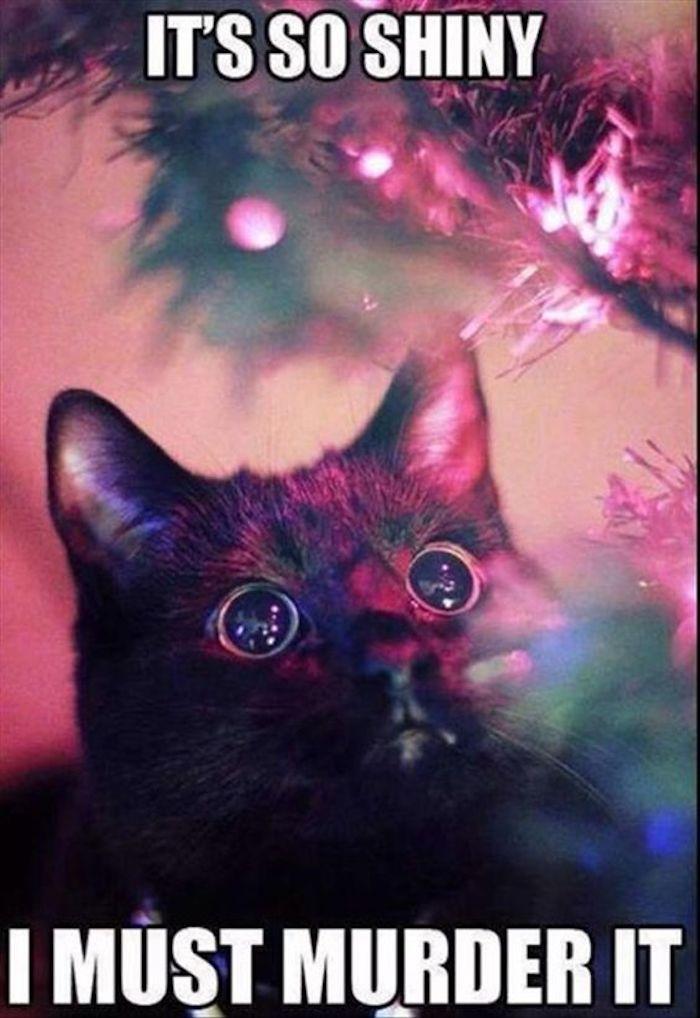 die Katze sieht wie hypnotisiert den Tannenbaum - lustige Weihnachtsgrüße