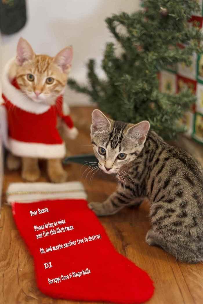 die Katzen haben den Tannenbaum zerstört und jetzt schreiben zu Weihnachtsmann