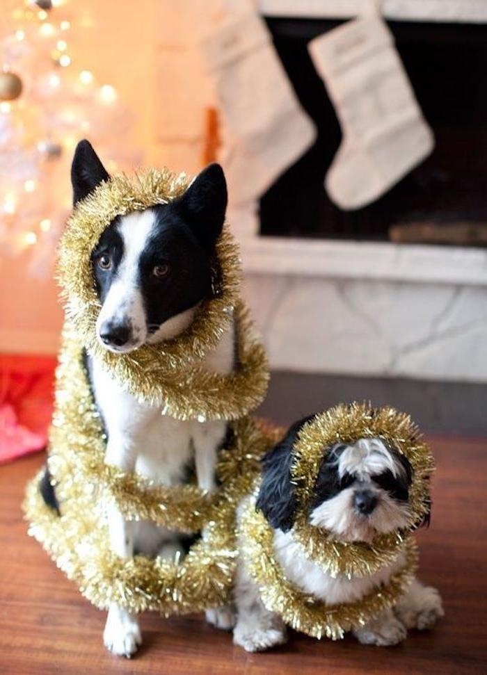 Lustige Bilder zu Weihnachten - zwei entzückende Hunde mit einer Girlande gepackt