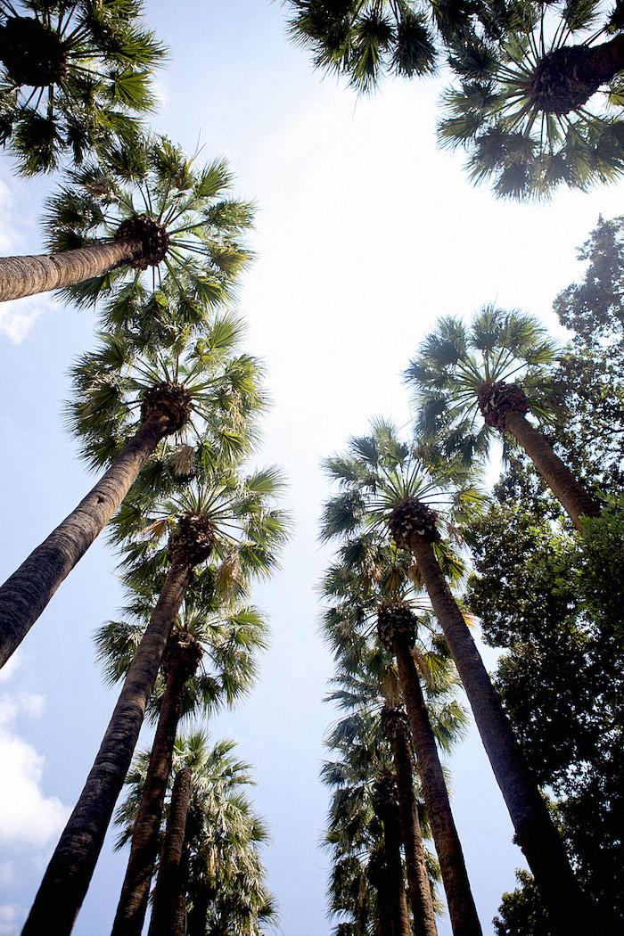 griechenland hauptstadt palmen hohe bäume himmel wolken braun grün farben der natur blauer himmel