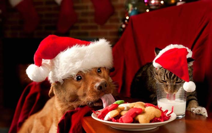 der Weihnachtsmann hat die Kekse gegessen und die Milch getrunken - sagen die Katze und den Hund - Weihnachtsfotos