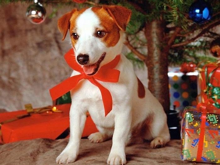 das gewünschte Geschenk von dem Kind - einen Welpen - Weihnachtsfotos