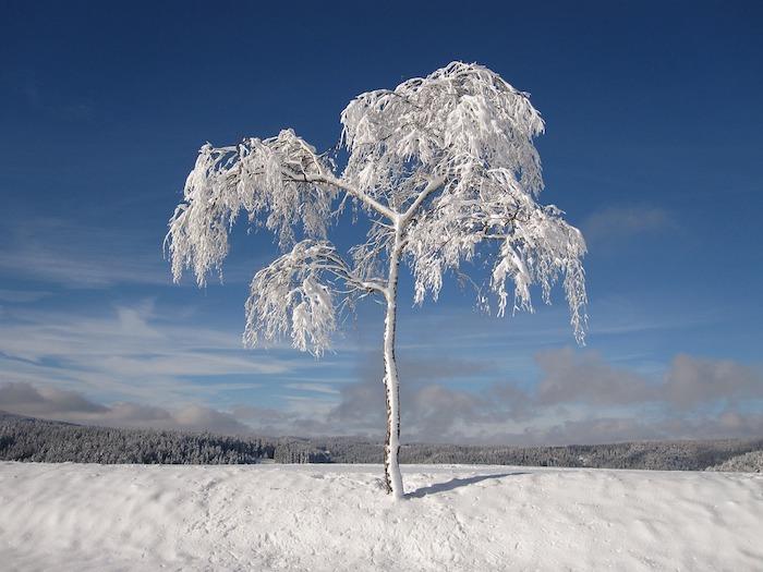 romantische winterbilder - ein blauer himmel mit grauen und weißen wolken und ein baum mit schnee