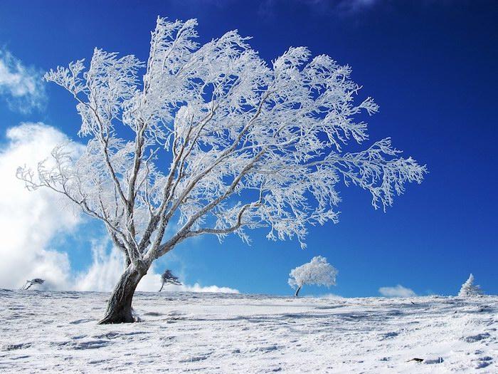 schnee und ein blauer himmel mit weißen wolken - ein weißer baum mit schnee