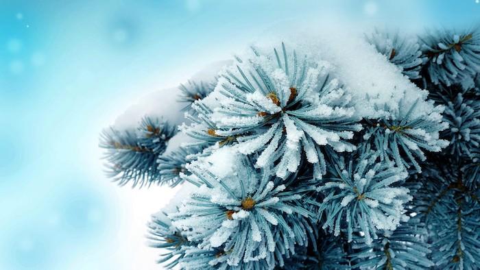 winterbild mit einem baum mit schnee und schneeflocken - romantische winterbilder