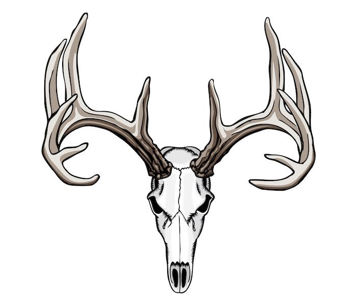 ein totenkopf eines hirsches mit großen braunen hörnern - ein totenkopf tattoo
