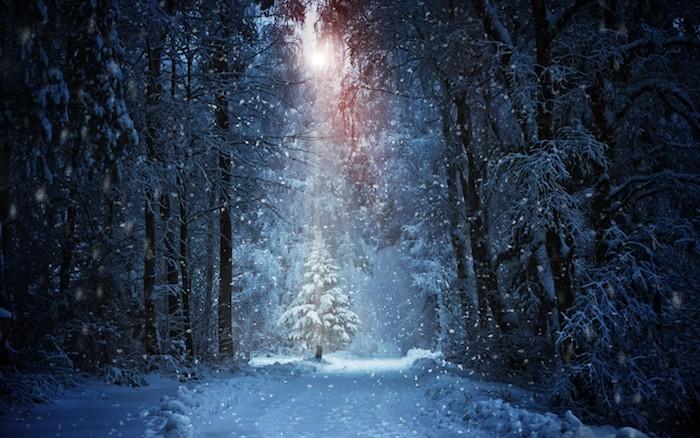 ein wald mit vielen bäumen mit . schnee und einem tannenbaum - schöne winterbilder