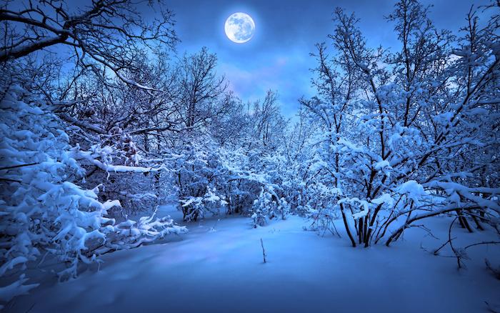 himmel mit blauen wolken und einem großen weißen mond - ein wald mit vielen bäumen und schnee