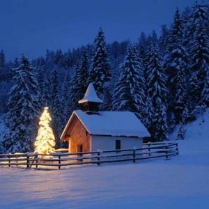 Einzigartige Winterbilder - genießen Sie die Schönheit des Winters!