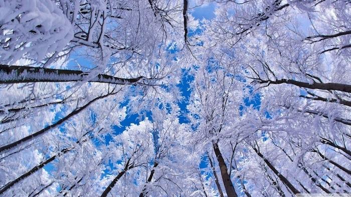 ein blauer himmel - ein wald mit großen weißen bäumen mit schnee