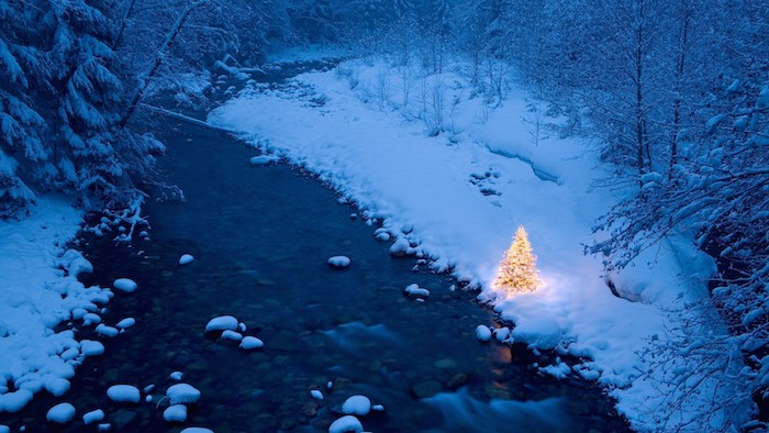 ein wald mit bäumen und einem tannenbaum und fluss in der nacht - schöne winterbilder
