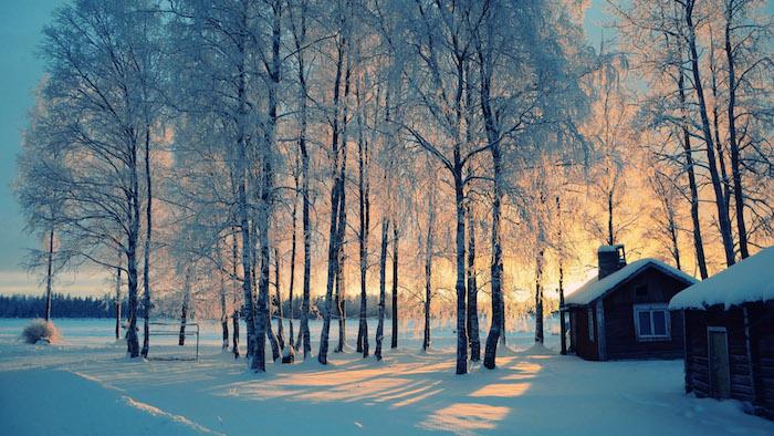 wald mit vielen bäumen und schnee im sonnenuntergang und zwei häuser -