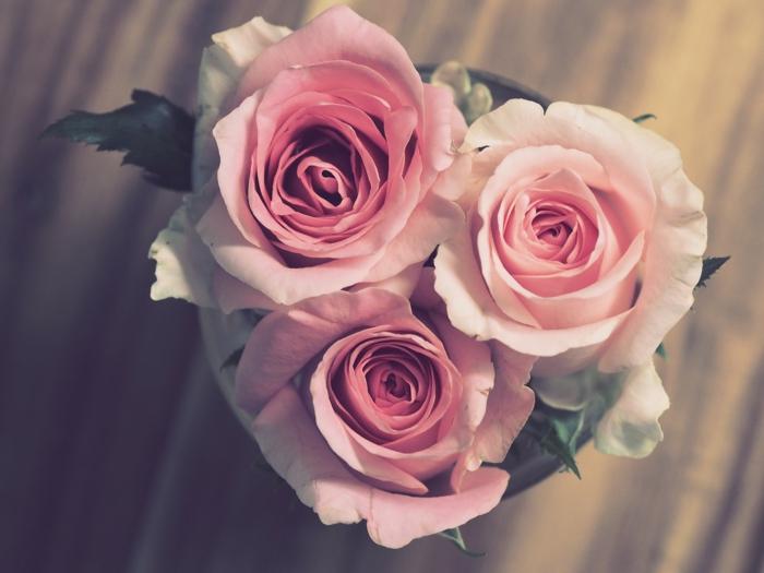 drei Rosen, Bilder zum Valentinstag, rosa Blumen in der Form von Herz