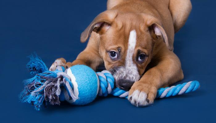 spielzeug hund, kleiner hund, selbsgemachtes hundespielzeug aus tennisball und seil