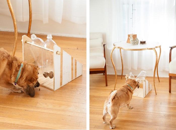 denkspiele für hunde, hunde futtern, selbstgemachter futterspender aus holz und plastikflschen